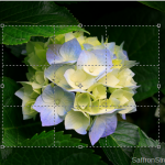 Crop Images in Adobe Photoshop CS5